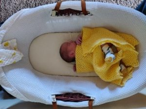 Tiny baby in a moses basket